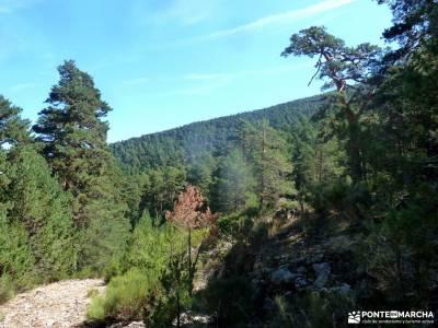 viajes grupos bosques en otoño rutas por navacerrada valle de jerte cerezos en flor concierto de la